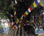 Северная Индия, Люмбини, место рождения Будды