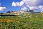 Восточный Казахстан, Западный Алтай, Ивановский хребет, истоки Малой Ульбы