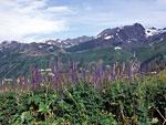 Катунский хребет – самая высокая часть Алтая. Но на Алтае высоки не только горы. Заблудиться можно и в траве.
