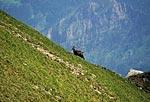Россия, Кавказский природный биосферный заповедник, массив Джуга,