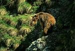 Россия, Краснодарский край, Кавказский природный биосферный заповедник, массив Джуга,