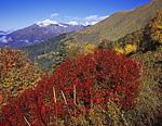 Осенние краски на склоне горы Коготь. На дальнем плане горы по ту сторону долины Лауры.