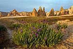 Весной здесь довольно часто можно встретить цветущие ирисы.