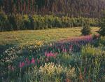 Россия, республика Саха (Якутия), река Лена, среднее течение, в 30 километрах выше Ленска.